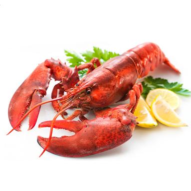 lobster-383